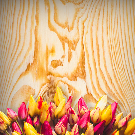 colrful: Colrful tulipes on wooden background Stock Photo