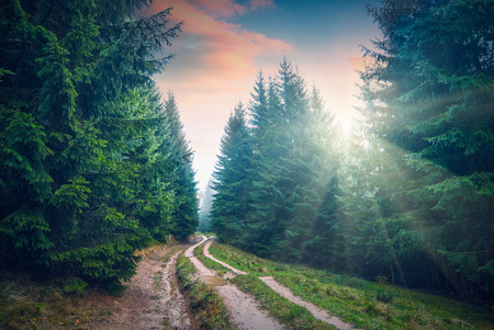 Road through the beautiful Carpathian forest in a surset light