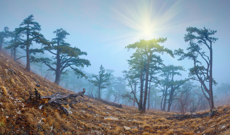mistic: Mistic foggy forest on the rocky hillside Stock Photo