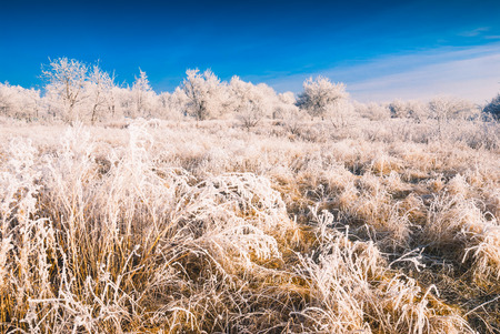 hoar: Morning in a winter valley covered with hoar frost