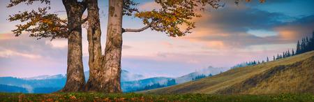 Oak tree in a mountain valley