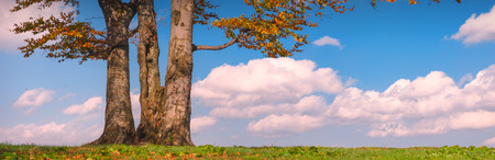 posbank: Lonely oak tree on a green hill with blue sky. Autumn colors