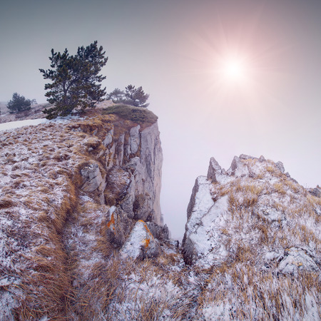 rocky peak: Winter landscape with a tree on a rocky peak at the fog