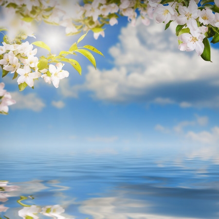 Nature composition. Apple flowers on a blurred sky background, reflected in water