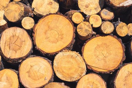 Wood texture fond ont de nombreux journaux qui coupent du grand arbre et petit arbre Banque d'images - 37050023