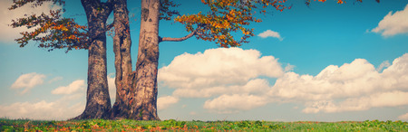 posbank: Lonely oak tree on a green hill with blue sky. Autumn vintage colors Stock Photo