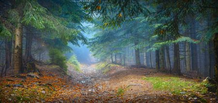 Forêts des Carpates Misty avec de vieux sapins dans une lumière bleue magique Banque d'images - 37102665