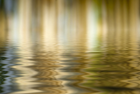 tropical border: Natural blured bamboo background, reflected in water