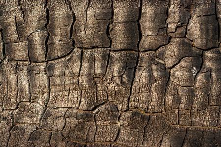 Burnt wooden background photo