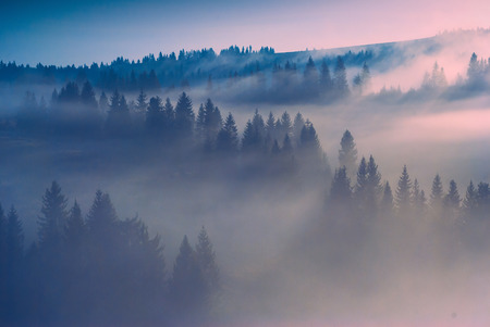 new day: Morning light in a Carpathian misty forest. Early morning. New day