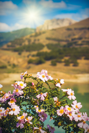 Beautiful mountain valley with  briar flowers photo