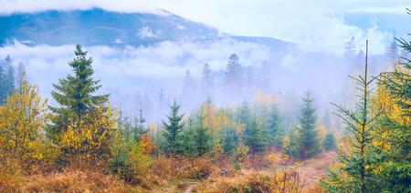 civilisation: Wild Carpathian mountain forest. Out of civilisation. Deep nature.