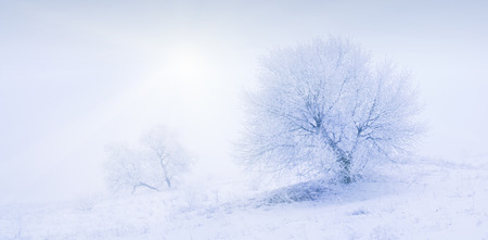 Vintage picture. Beautiful winter snow valley with lonely tree in a frost. photo