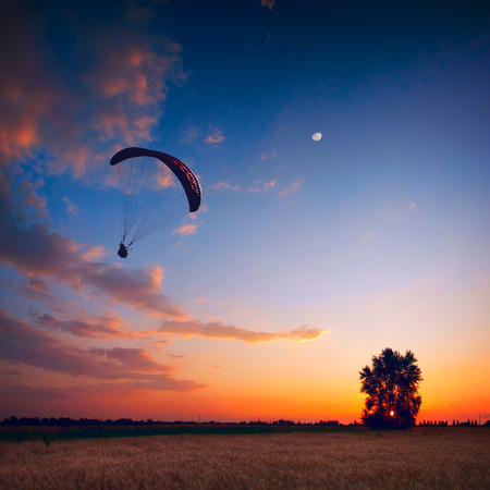 paraglide: Paraglide in a sunset sky above the wheat field with lonely tree.