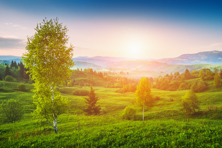 summer background: Beautiful sunrise in a Carpathian spring misty valley with birch trees on a green hill Stock Photo