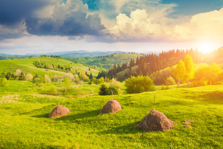 haystacks: Beautiful bright morning with haystacks in a Carpathian valley