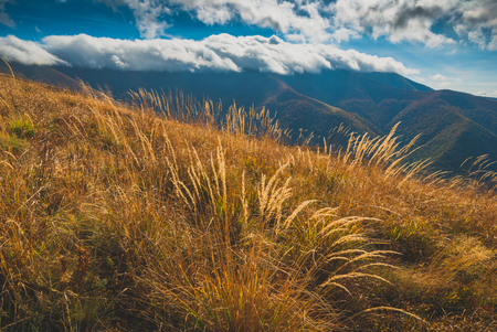 spring background: High yellow grass on a hill in a Carpathian mountain valley