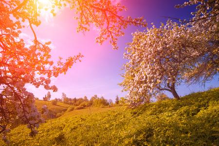 Bloeiende wilde appels tuin in een groene Karpaten berg vallei. Majestic zonsopgang. Spring time