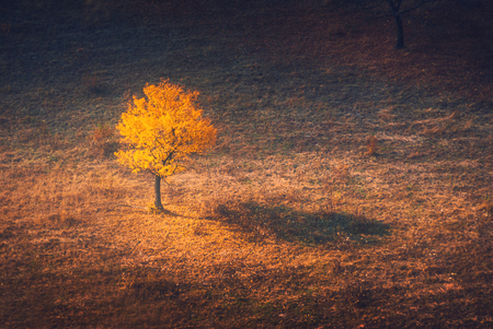 lonelyness: Beautiful lonely yellow tree in a autumn valley. Ukraine, Europe