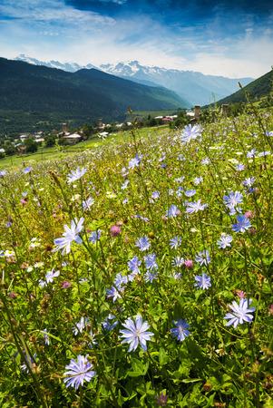 svaneti: Beautiful blue flowers on a green hill in caucasian mountains. Georgia, Svaneti region, Mestia.