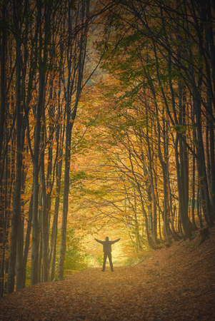 stays: Hiker stays with raised hands and enjoy beautiful autumn misty forest with yellow and red trees