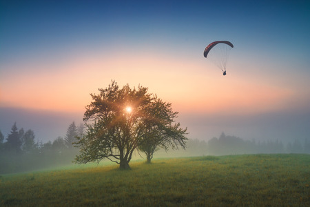 paraglide: Silhouette of flying paraglide in a sky above the misty valley with lonely tree on a hill. Carpathians, Ukraine, Europe.