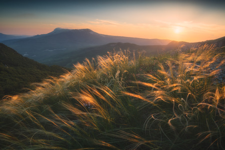 sway: Feather grass on a wind in a Crimea mountains valley.
