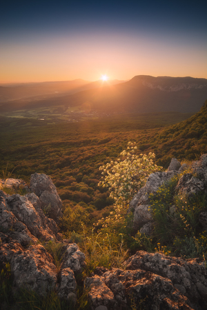 Flowering hawthorn on a cliffs edge in a light of sunrise. Crimea mountain valley. Stock Photo
