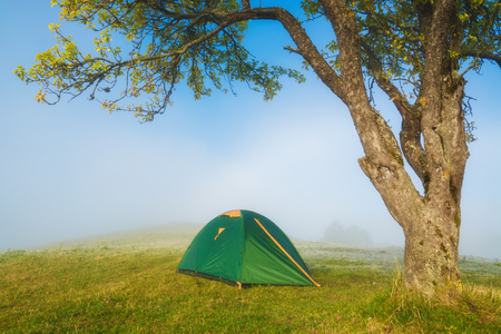 Travel tourists tent under the big tree on a green meadow in a misty valley.