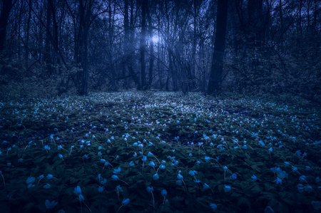 Majestic night spring forest covered with white flowers in a moon light. 版權商用圖片