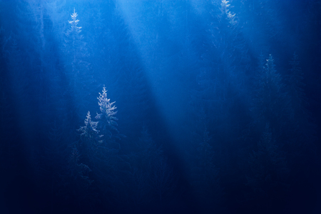 Misty forest in a deep blue water. Conceptual image.