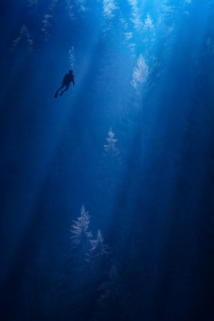 Conceptual picture of misty forest in a deep water with diver silhouette. 版權商用圖片