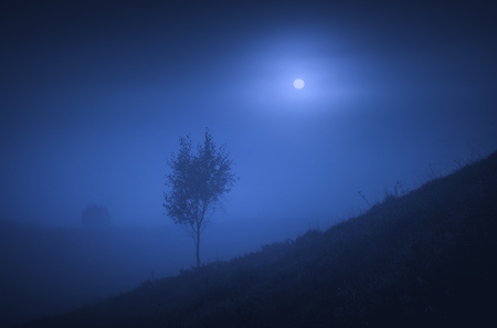 Lonely tree on a hill in a night foggy valley. The full moon in a sky. 版權商用圖片