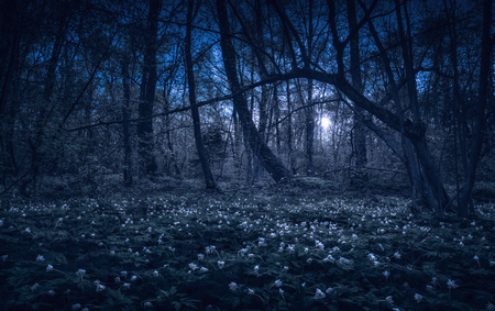 Majestic spring forest covered with carpet of flowers in a moon light at night. 版權商用圖片