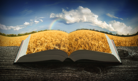 Golden wheat field on the pages of an open magical book. Education concept.