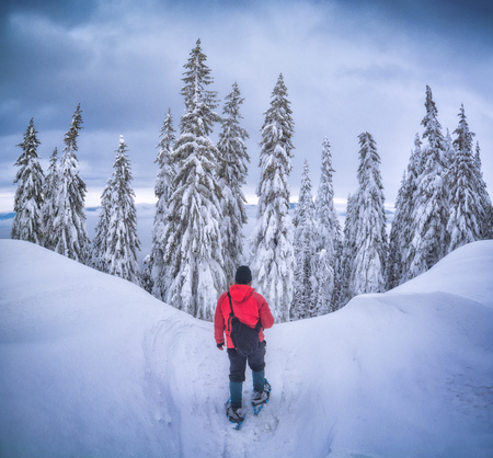 Hiker stand on a snow-covered hill in front of the winter forest. 版權商用圖片