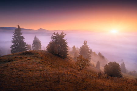 Beautiful countryside view of alpine carpathian mountain valley covered with fog. Grassy hills and meadows illuminated by morning sunlight. Wonderful nature scenery of Carpathians. Banque d'images - 121116503