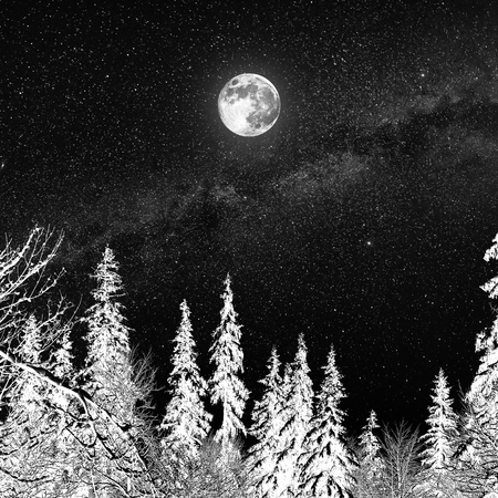 Full moon in a starry sky over the forest covered with snow. Winter landscape. Imagens