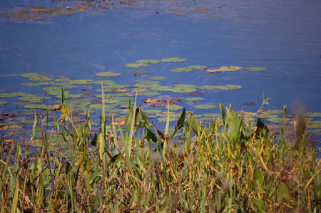 Water plants. Stock Photo