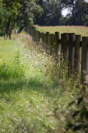 Spring blooming field bisected by a round log fence. Stock Photo - 8924534