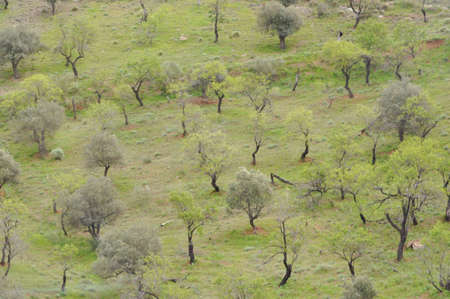 Grouping of trees on a hill. Stock Photo