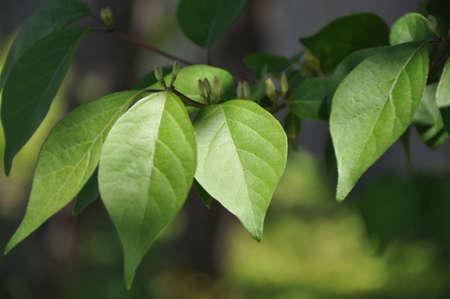 Shadowy leaves