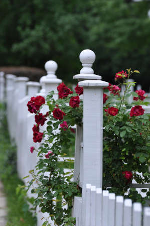 Decorated Picket Fence Stock Photo - 9769091