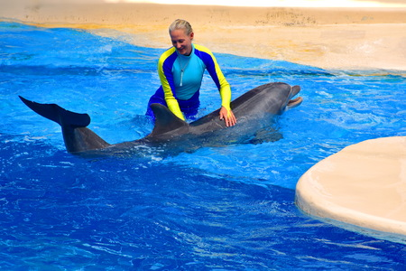 Orlando, Florida. September 11, 2018 Instructor with lovely dolphin on pool at Seaworld Dolphin Days Show.