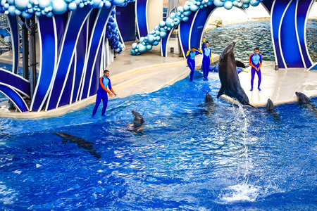 Orlando, Florida. December 25, 2018. Dolphin jumping in colorful Dolphin Day show; It is a festive celebration of our natural world at Seaworld in International Drive area (15)