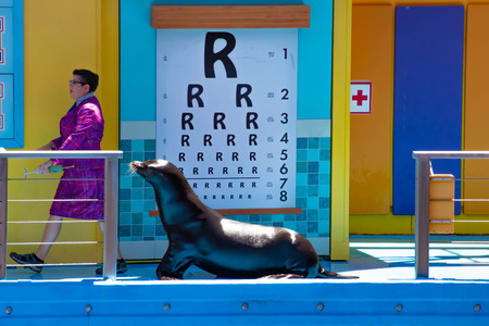 Orlando, Florida. April 20, 2019. Sealion listening attentively to teacher in Sea Lion High The New Class show at Seaworld Фото со стока - 122360780