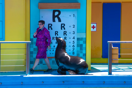 Orlando, Florida. April 20, 2019. Sealion listening attentively to teacher in Sea Lion High The New Class show at Seaworld Фото со стока - 122360781