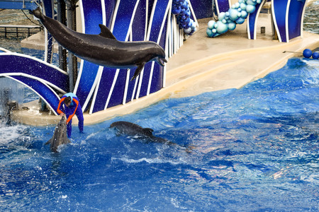Orlando, Florida. December 25, 2018. Dolphin jumping in colorful Dolphin Day show, It is a festive celebration of our natural world at Seaworld in International Drive area Редакционное