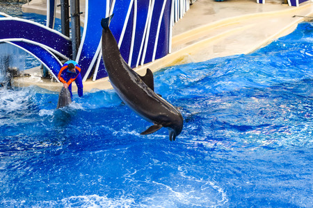 Orlando, Florida. December 25, 2018. Dolphin jumping in colorful Dolphin Day show, It is a festive celebration of our natural world at Seaworld in International Drive area Фото со стока - 122360789
