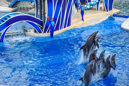 Orlando, Florida. December 25, 2018. Dolphin jumping in colorful Dolphin Day show, It is a festive celebration of our natural world at Seaworld in International Drive area Фото со стока - 122360790